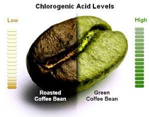 chlorogenic acid content highest in green coffee beans